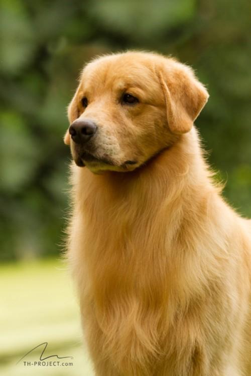 Nossos Cães Kron