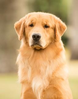 Nossos Cães Ruiva