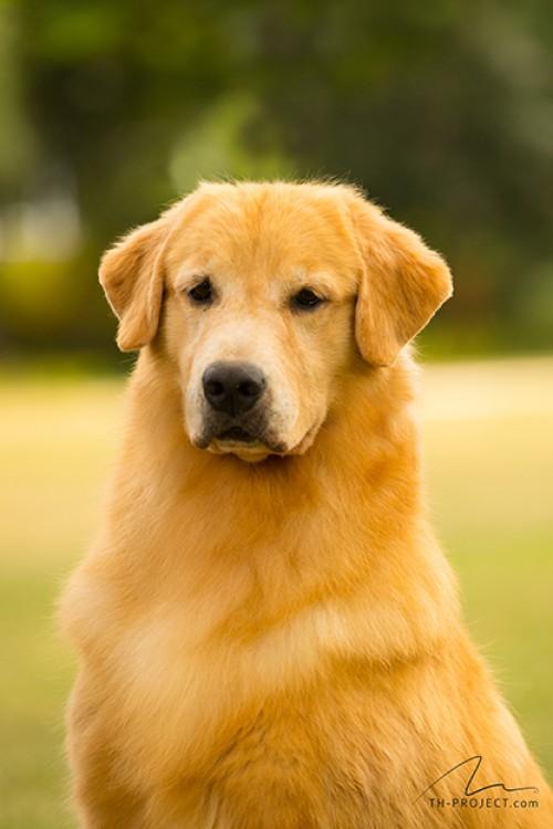 Nossos Cães Belinha