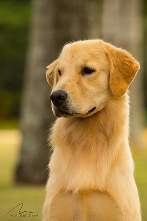 Nossos Cães Moana