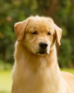 Nossos Cães Amy Lee