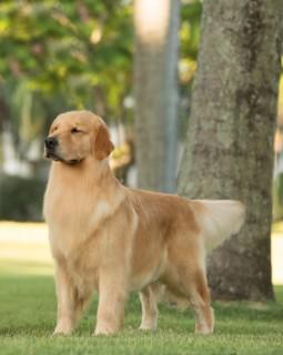 Nossos Cães Elle