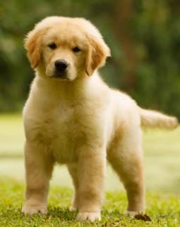 Nossos Cães Giulietta