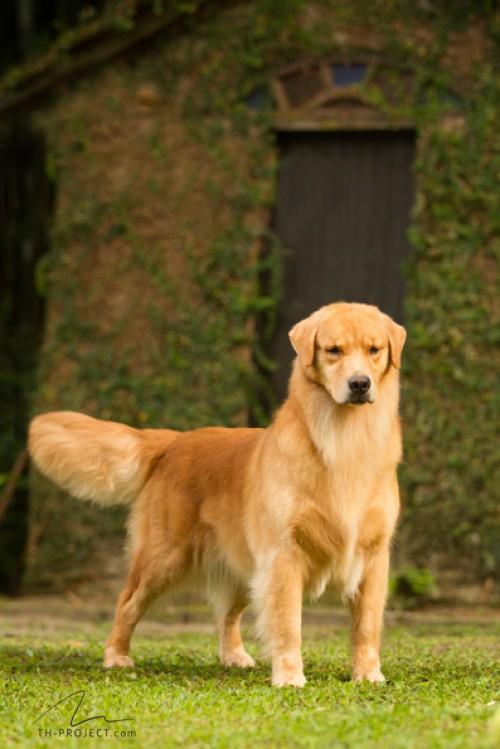 Nossos Cães Marlina