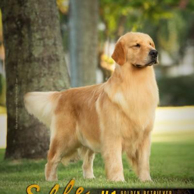 Galeria de Imagens: Capa Cães de Fato - Edição 120 - ELLE, #1 BRASIL 2018