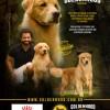 Galeria de Imagens: Cães de Fato - Ed. 120 - Westminster 2019