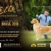 Galeria de Imagens: Revista Cães de Fato - Ed. 120 - Elle - GT Kopi Lwac - #1 Brasil 2018